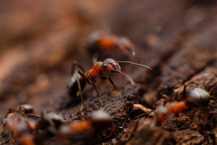 While no-one knows just how many, there are at well over 1 QUADRILLION ants sharing this planet with us.