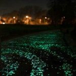 Glowing Driveway and Paths