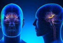 Poor nutrition can damage your hippocampus