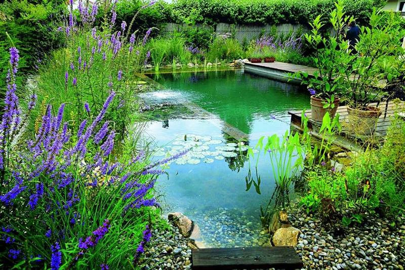 Welcome to the world of natural swimming ponds ideas2live4 for Koi pond next to swimming pool