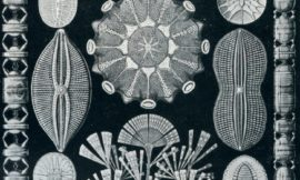Diatom Art – nature under the microscope