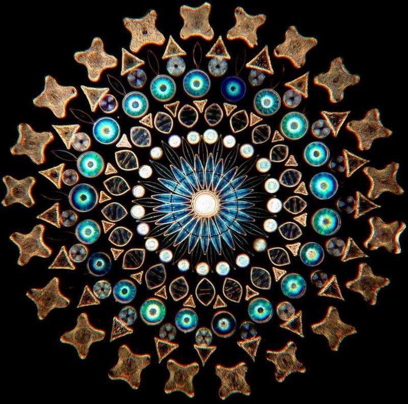 Diatom-art-4