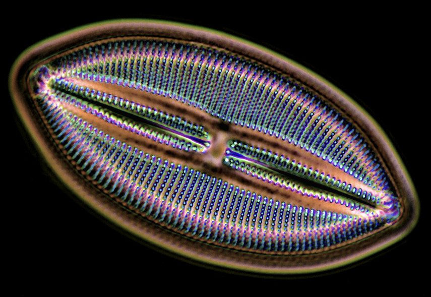 Diatom-extraordinary-detail-at-1600x-magnifaction