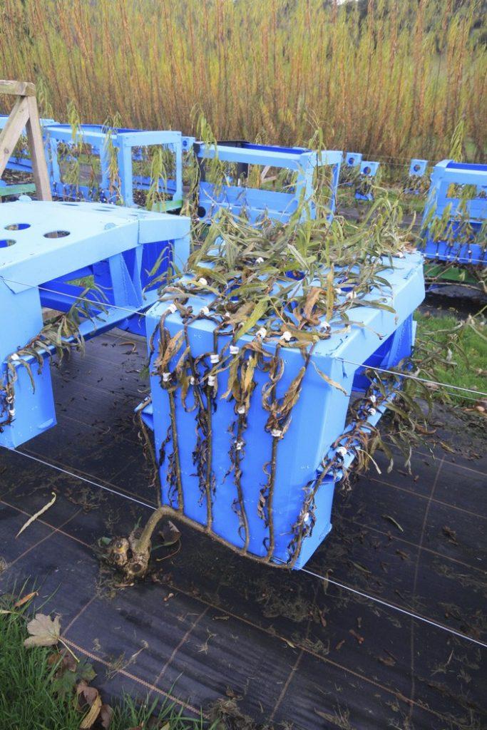 Full Grown Tree Furniture