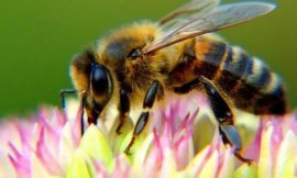 The Case of the Disappearing Bee