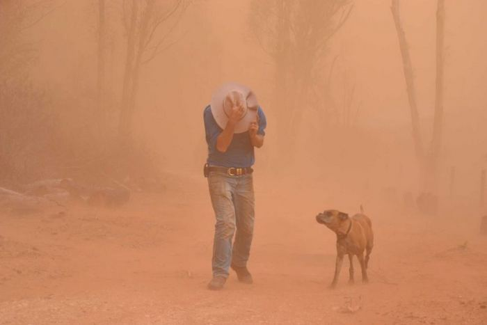 This dust storm followed on the heels of a devastating bushfire at Pinery Ridge, Sth Australia last November. The fire killed 70,000 domestic animals and an untold number of native animals.