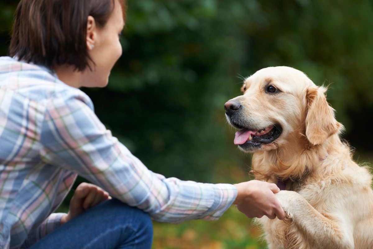 If your dog has trust issues – you may be causing it!