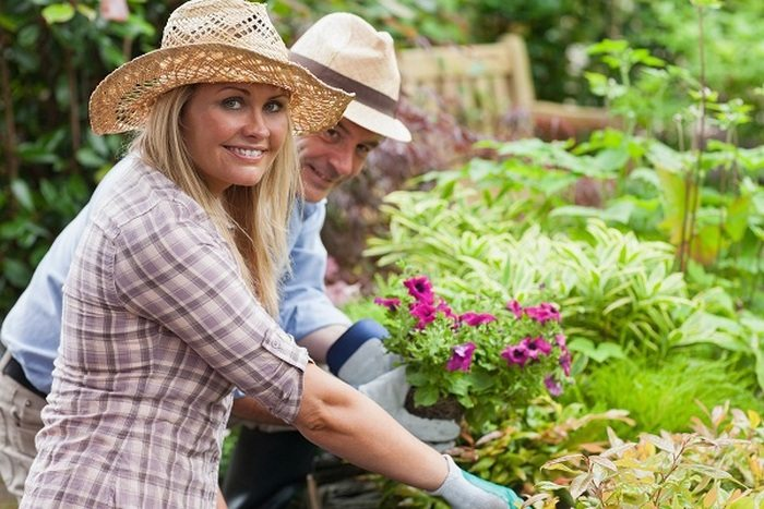 Gardening and Landscaping Tips for Beginners1