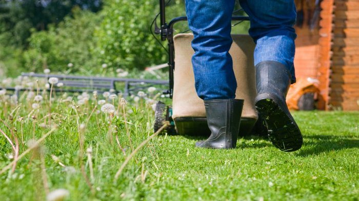 Gardening and Landscaping Tips for Beginners2