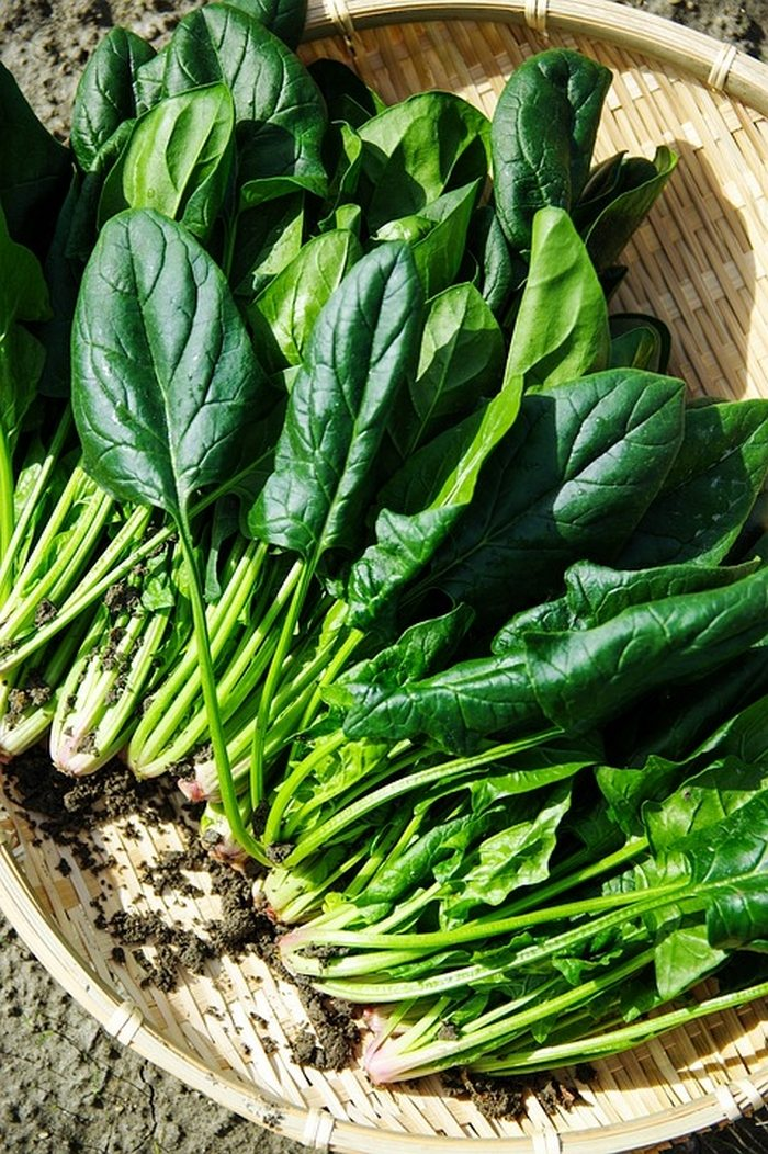 12 Vegetables To Plant In August Zone 9: Top 5 Vegetables To Grow Over Winter