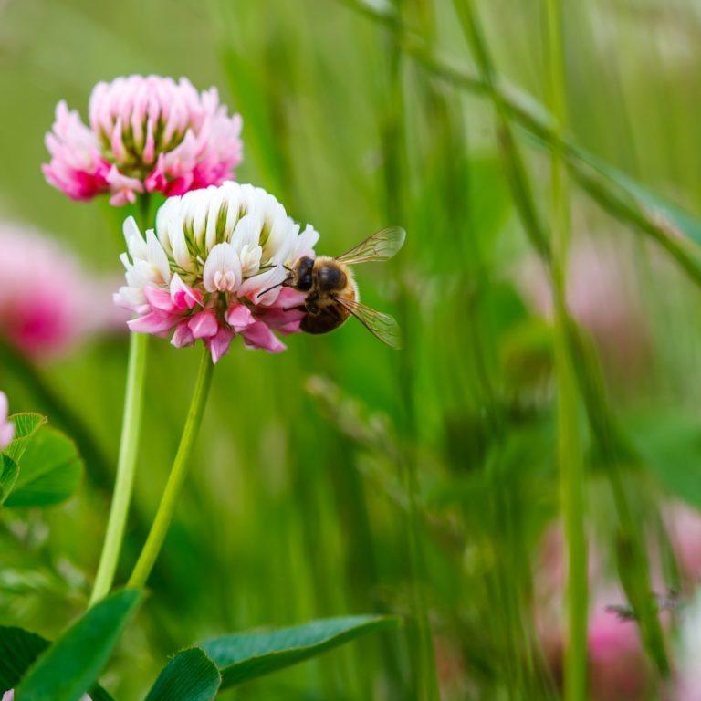 10 reasons for eating more honey!