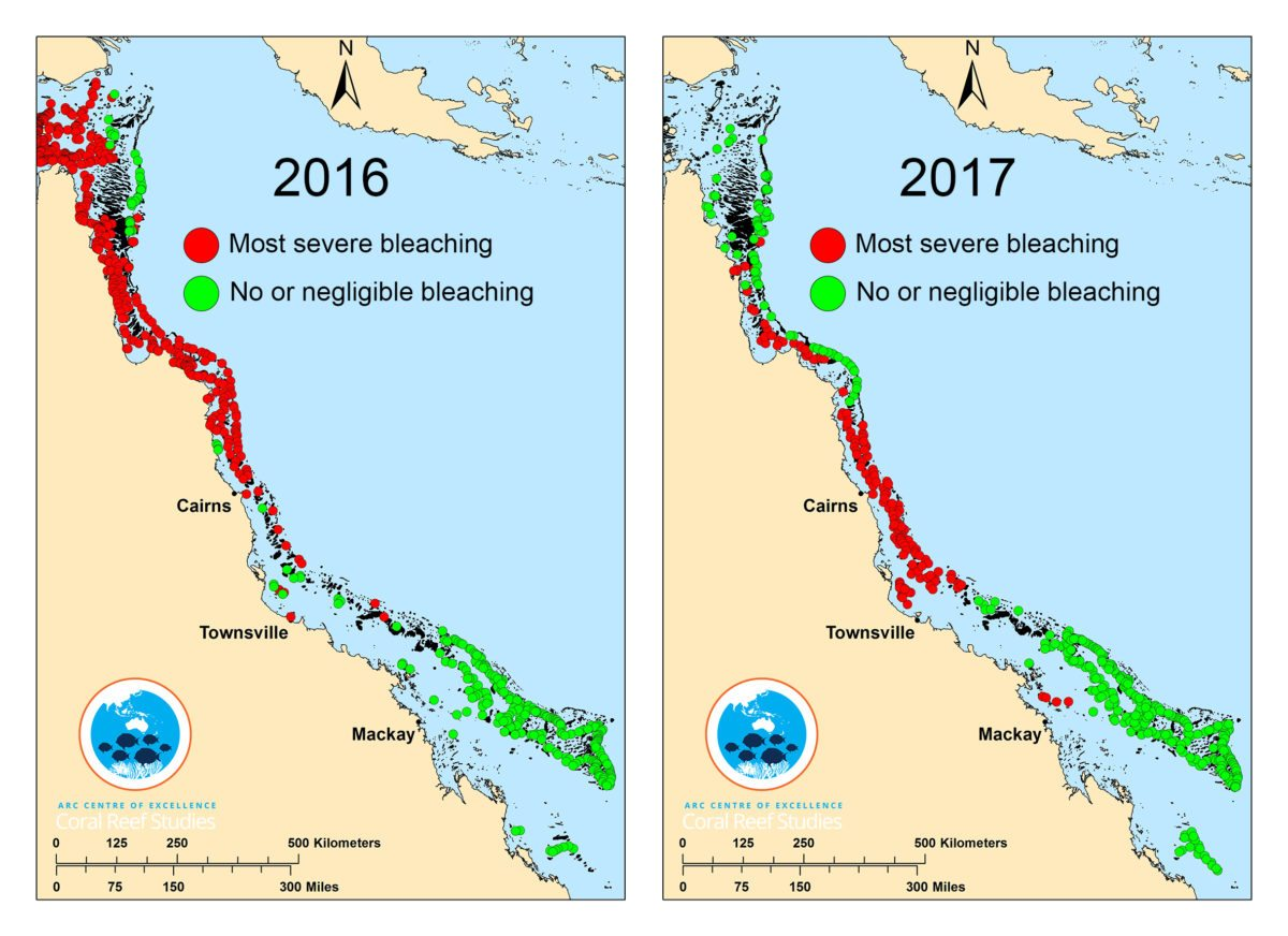 A This composite map showing surveyed coral reefs in 2016 (left panel) and 2017 (right panel). Click the image to see a larger version. Not all data is shown, only reefs at either end of the bleaching spectrum: Red circles indicate reefs undergoing most severe bleaching (60% or more of visible corals bleaching) Green circles indicate reefs with no or only minimal bleaching (10% or less of corals bleaching).