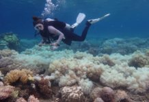 Coral bleaching at Orpheus Island