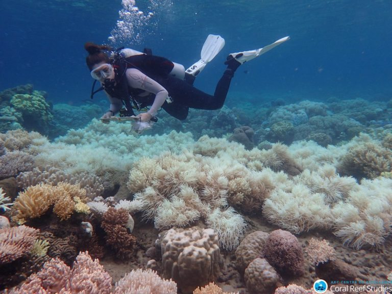 Is there a future for the Great Barrier Reef?