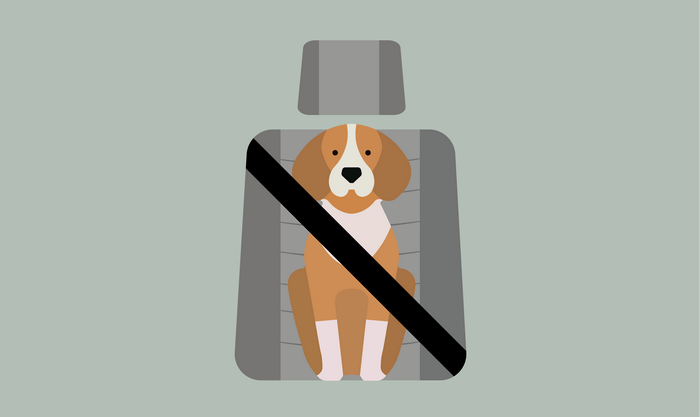 Dogs jumping around in a car are nothing short of dangerous but, we should belt them up for their own safety too.