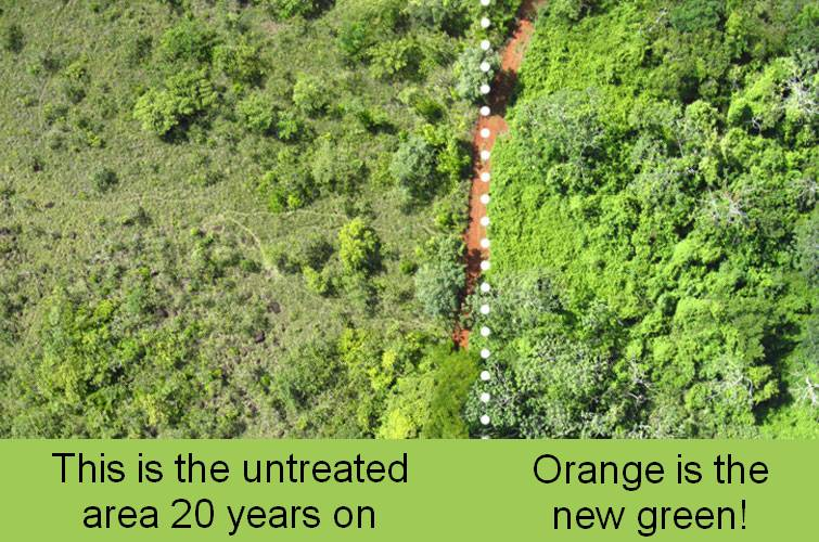 20 years on, the difference in biomass between the two areas is dramatic. Start using that citrus peel in your compost!