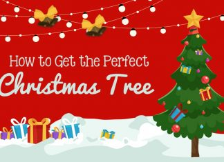 Picking the perfect Christmas tree for your home