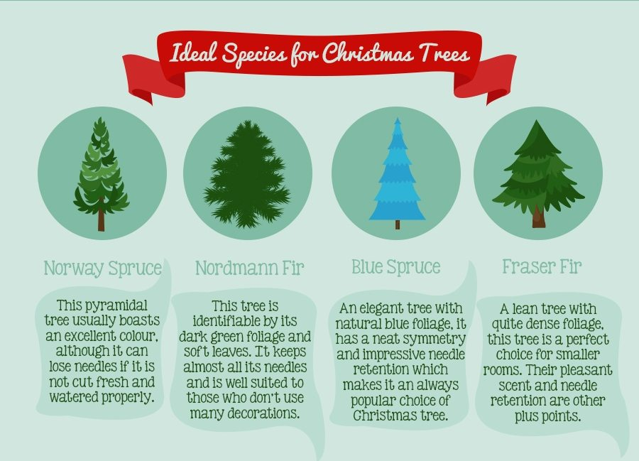 How To Pick The Perfect Christmas Tree For Your Home