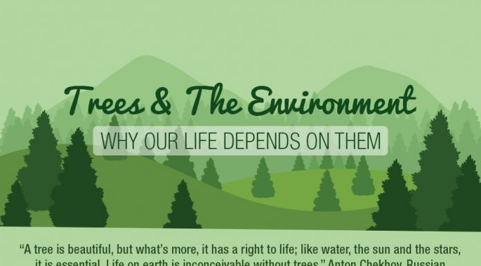 Why we need trees - 1