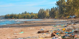 Terrible pollution of the ocean shore. An ecological disaster