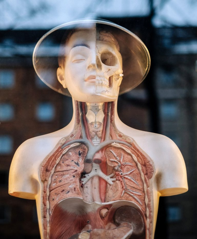 Scientists discover new human organ!