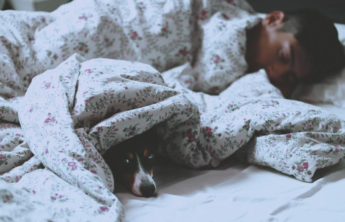 It's estimated that around 70% of pet dogs and cats wouldn't dream of sleeping anywhere but in our beds!