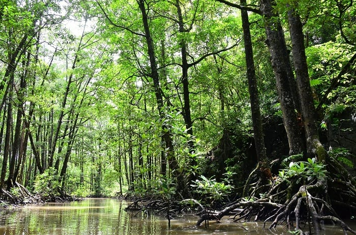 Roughly half of the world's mangrove forests have been lost.
