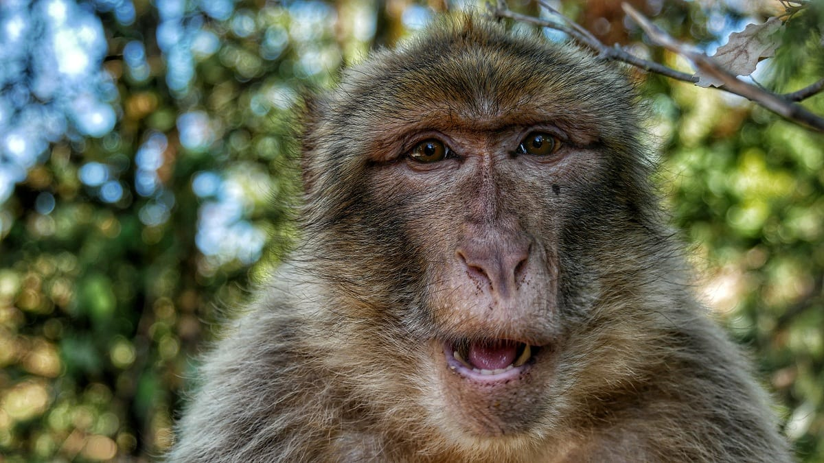 Scientists are Creating Human-Monkey Hybrids in China