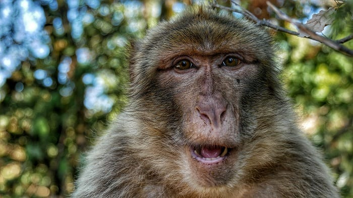 Scientists have created embryos that are part human, part monkey.