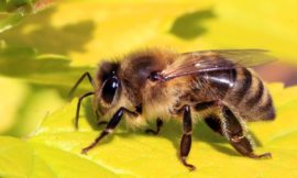 Pesticides Causing Mass Bee Deaths in Brazil, Say Researchers