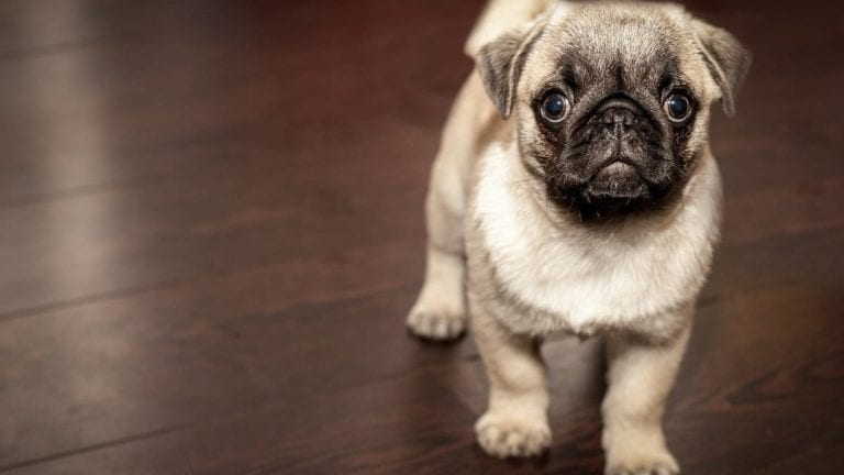 Pets Make You Healthier, say Scientists