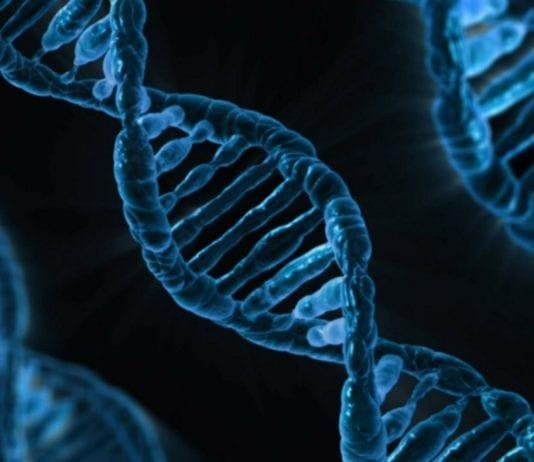 Cancer has origins in ancient cellular pathways