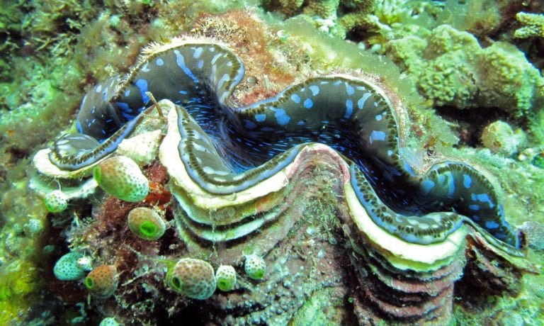 Giant Clam Poachers in South China Sea Signal Beijing's Real Policies