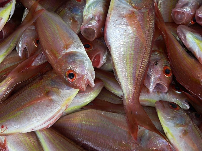 Filipino fish harvests have seen a dramatic decline over the past five years.