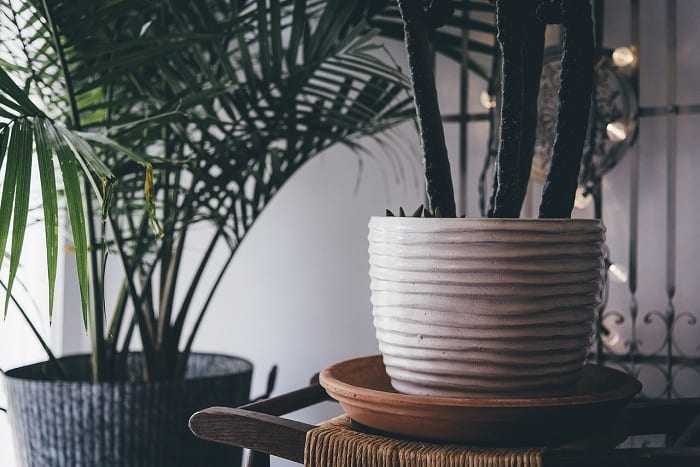 Plants create a relaxed and happy ambiance.