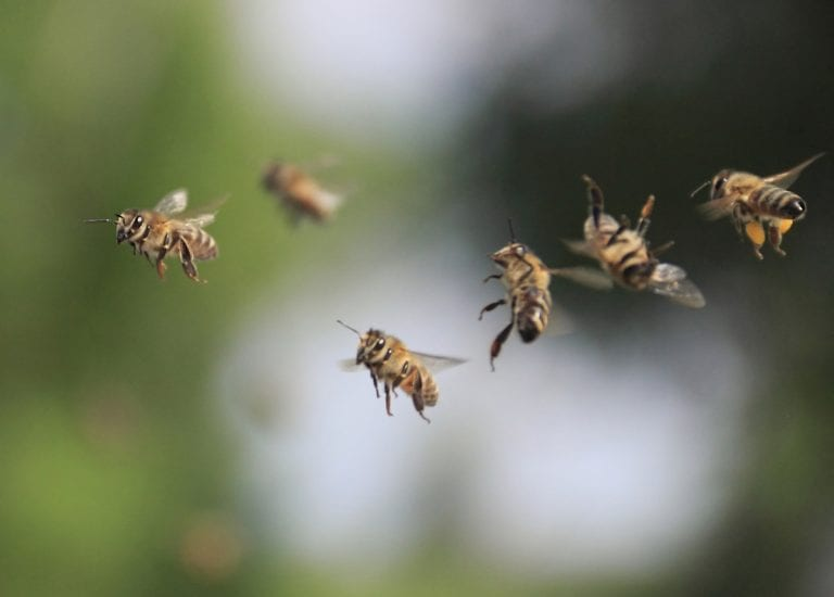 The Secret Genius of Honeybees