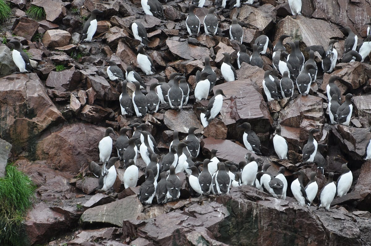 Mysterious Blob Kills a Million Seabirds in North America