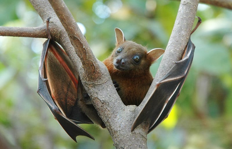 There are more than 1,300 species of bats in the world.